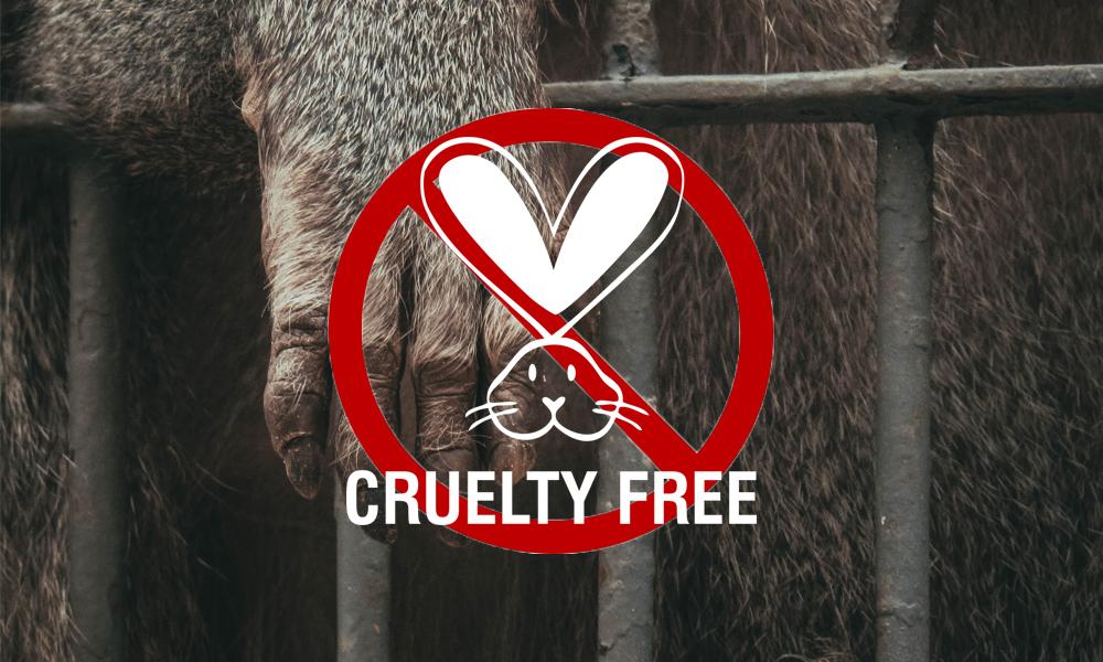 Cruelty-free, COVID-19, korona, koronavírus