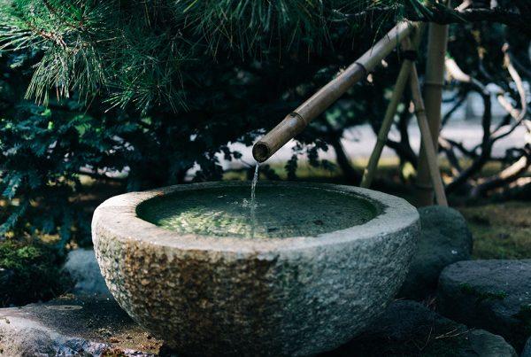 bambusz, bambuszpor, krém, arc, bőr, tápláló, egészséges, tápanyag, hidratáló, ránctalanító, öregedésgátló, natúrkozmetikum, vegán, összetevő,